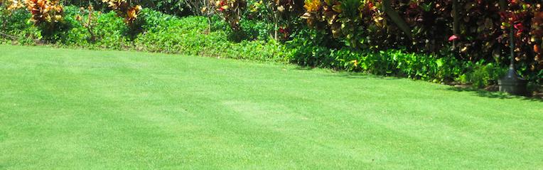 Proper lawn maintenance